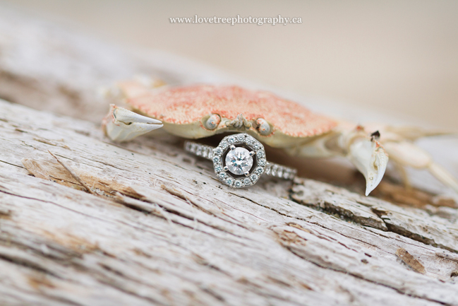 Engagement Ring with a crab | Parksville engagement photographer www.lovetreephotography.ca