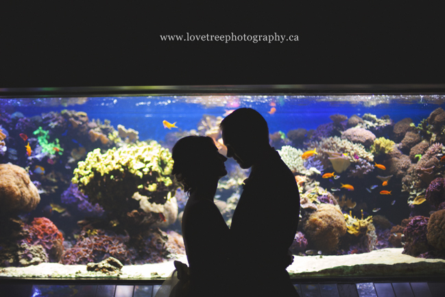 A Vancouver Aquarium wedding by award winning photographers www.lovetreephotography.ca