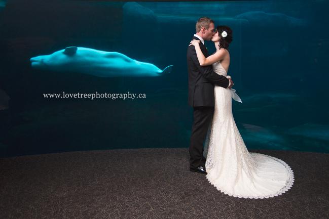 Vancouver Aquarium Wedding