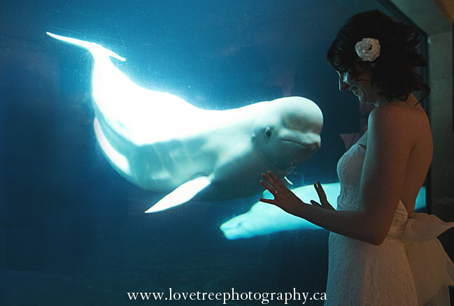 Intimate Vancouver Aquarium Wedding Dalen Stephanie